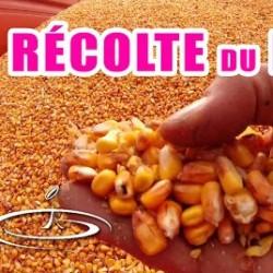 La récolte du maïs grain – 2015