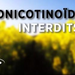neonicotinoides 2016