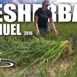 desherbages mauvaise herbe manuel 06 2016