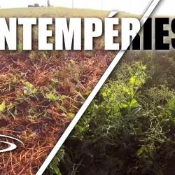 impact intemperie culture 06 2016