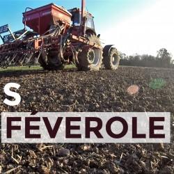 semis-feverole-12-2016