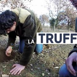 recolte culture truffe serge chinon 02 2017