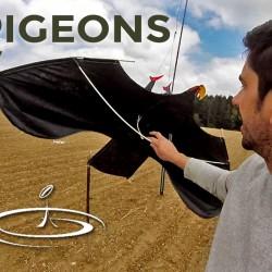 pigeon cerf volant effaroucher 05 2017